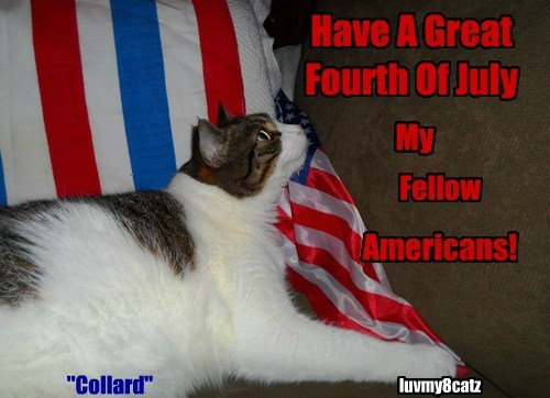 """""""Collard"""" Have A Great Fourth Of July My Fellow Americans! luvmy8catz"""