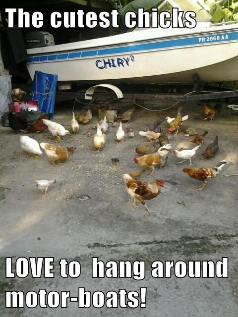 The cutest chicks  LOVE to  hang around motor-boats!