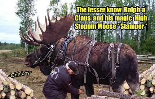moose - 7631477760