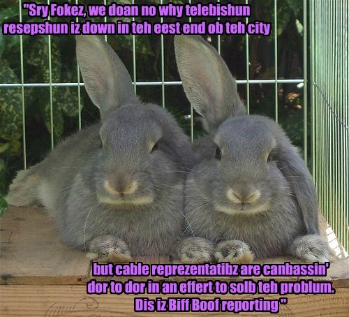 bunnies funny television - 7631696640