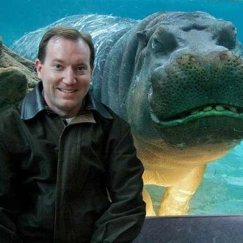 photobomb funny hippopotamus