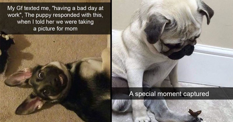 snapchat dogs