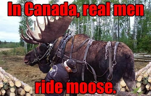 Canada men funny mouse - 7631877632