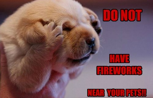 DO NOT HAVE FIREWORKS NEAR YOUR PETS!!