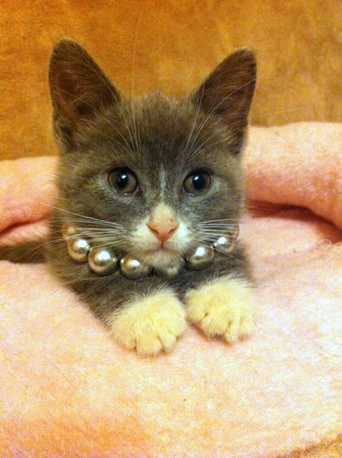 necklace kitten bunny - 7632570624