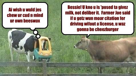 need for speed,funny,cows