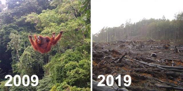 nature 10 year photos challenge planet - 7633669