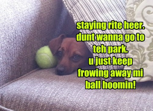 fetch ball park funny - 7634225664