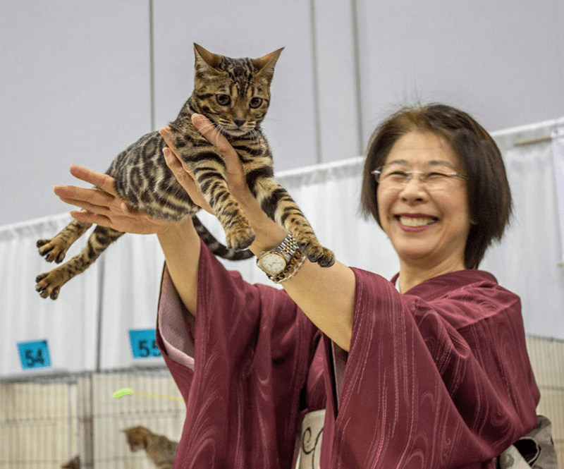 cat show portland 2019 cat photos Cats - 7634437