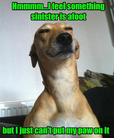 squint paw afoot sinister - 7634543616