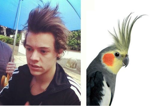 weird hair,birds,funny,harry stiles
