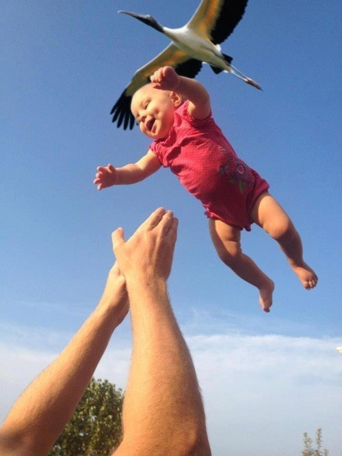 Babies,storks,funny,g rated,parenting
