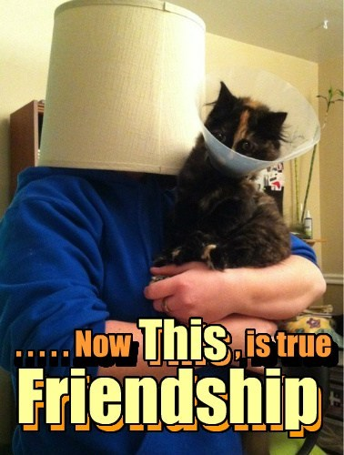 . . . . . Now , is true Friendship n n This . . . . . .Now , is true This Friendship