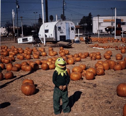 wtf kermit mask funny pumpkins - 7634838784