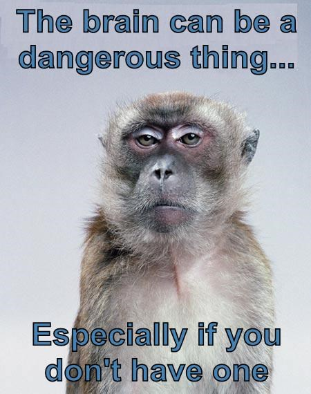 monkeys brains dangerous funny - 7635163648