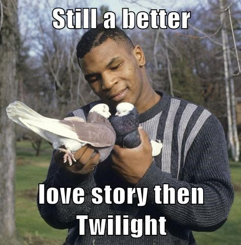 better love story than twilight birds twilight classic mike tyson