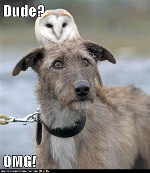 Dude?  OMG!