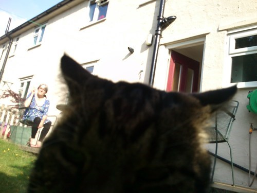 photobomb Cats funny - 7637340672
