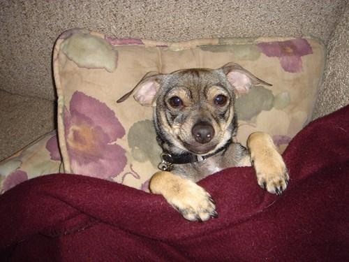 bedtime,blanket,story,dogs