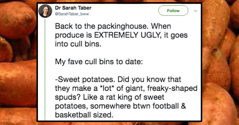 twitter posts about food waste in america