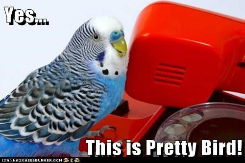 yes this is dog,pretty bird,funny