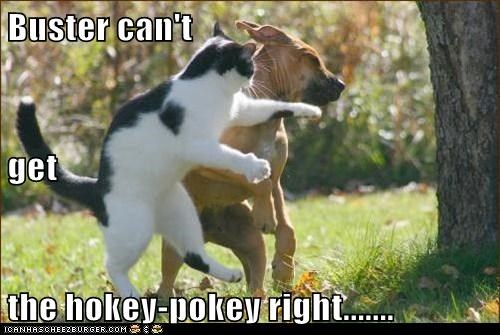 Buster can't  get  the hokey-pokey right.......