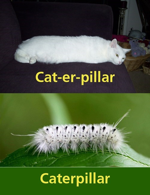impersonation sleep funny caterpillar - 7640435968