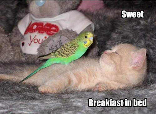 Cheezburger Image 7640785152