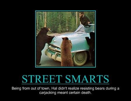 street smarts bear funny - 7641070080