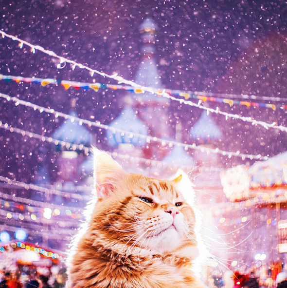 russia,photography,Cats