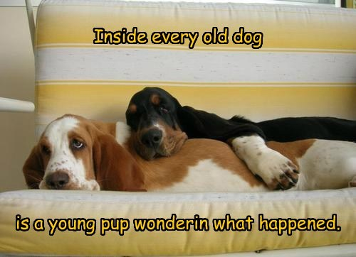 old life pup funny
