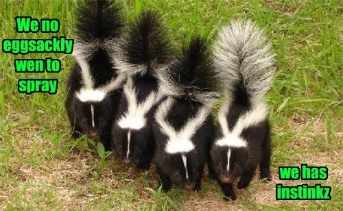 skunks,spray,funny,instincts