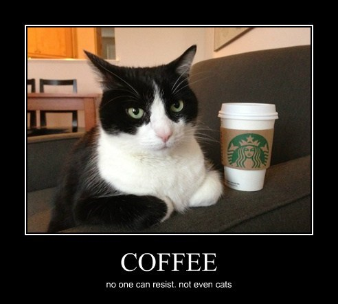 COFFEE no one can resist. not even cats