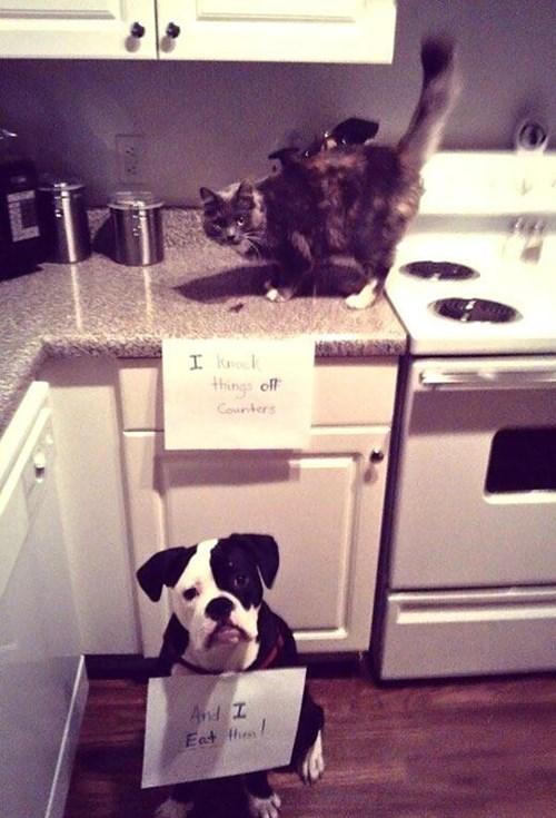 teamwork mischief Cats funny - 7642726656