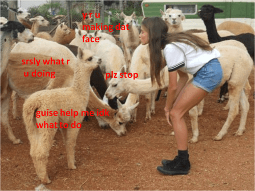 staph alpaca human - 7642758656