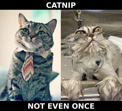 Not Even Once,cat nip,funny