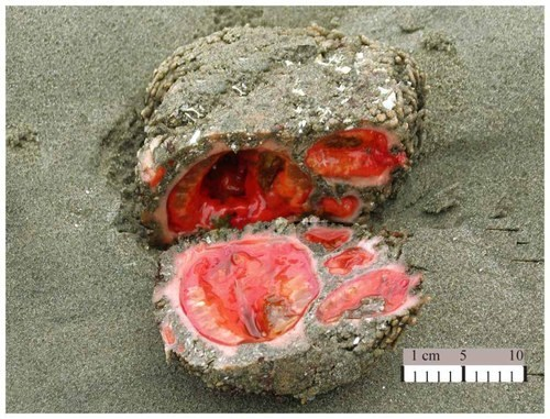 living rock wtf science biology funny animals - 7642776832
