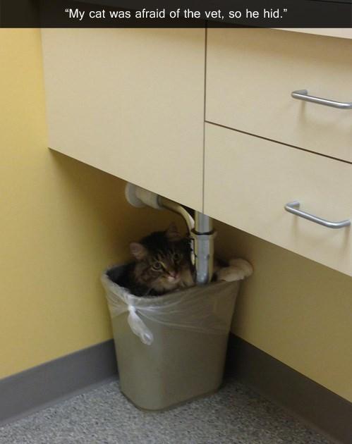 trash,vet,hiding,funny