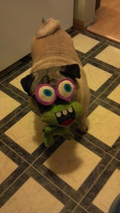 derpy pug stuffed animal alien funny - 7642856960