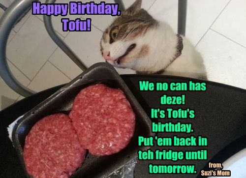 We no can has deze! It's Tofu's birthday. Put 'em back in teh fridge until tomorrow. Happy Birthday, Tofu! from, Suzi's Mom