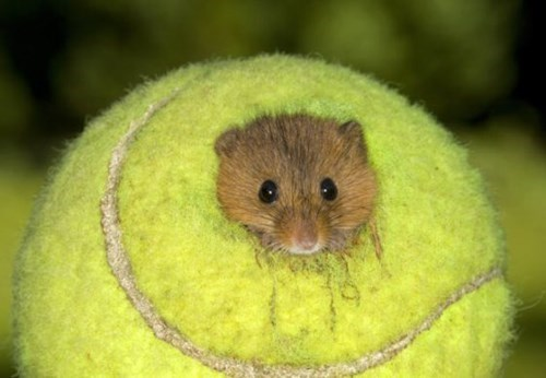 ball cute tennis serve mouse