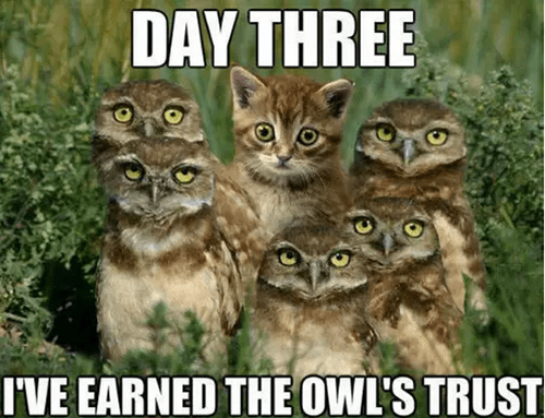 owls,day,funny