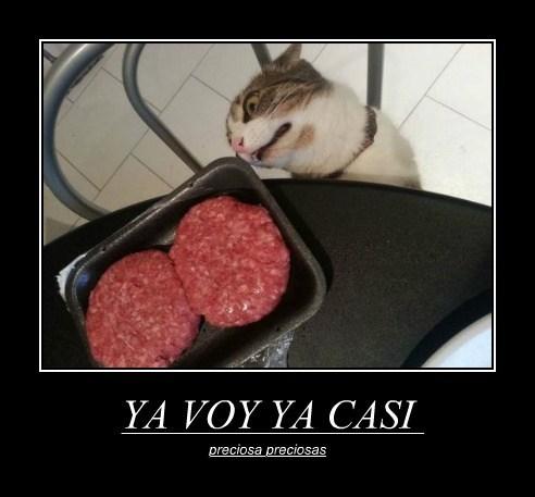 Cheezburger Image 7643229440