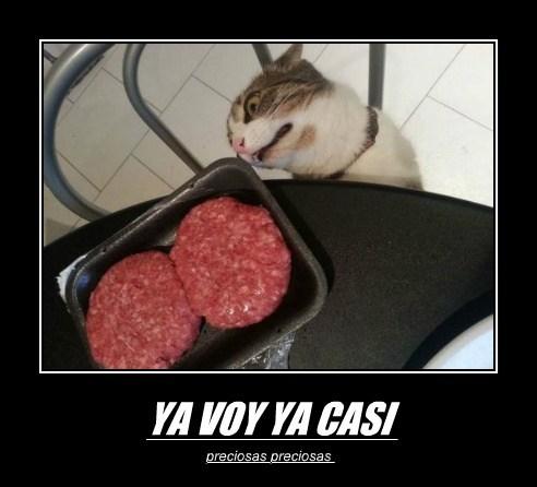 Cheezburger Image 7643232256