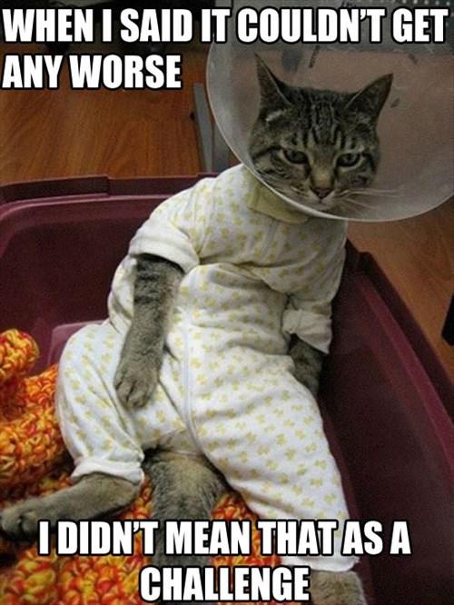 onesie worse shame funny - 7643361792
