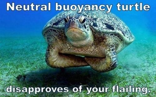 neutral swimming turtle - 7643382272