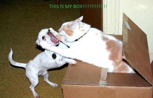 dogs box boundaries Cats funny