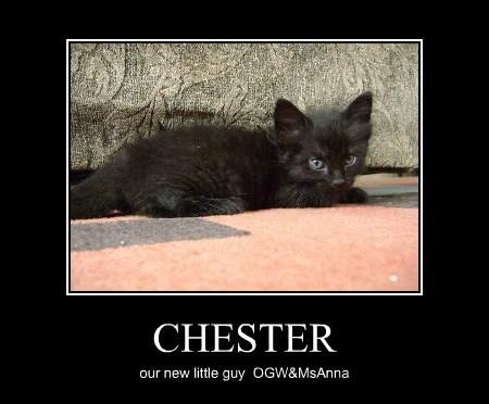 CHESTER our new little guy OGW&MsAnna