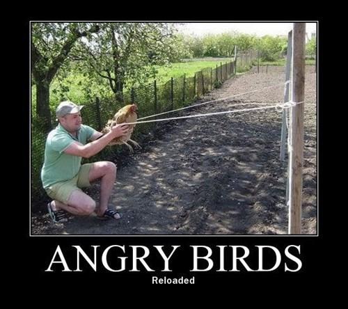 angry birds wtf bad idea funny - 7643546880