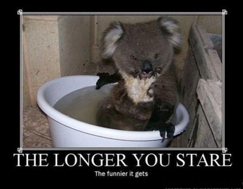 bath koala funny animals - 7643559936